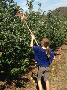 Going to the top for the best apples
