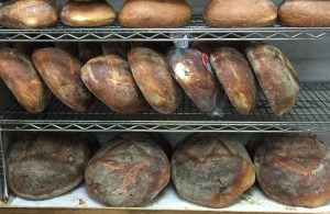 Terranova Bakery;s fresh bread